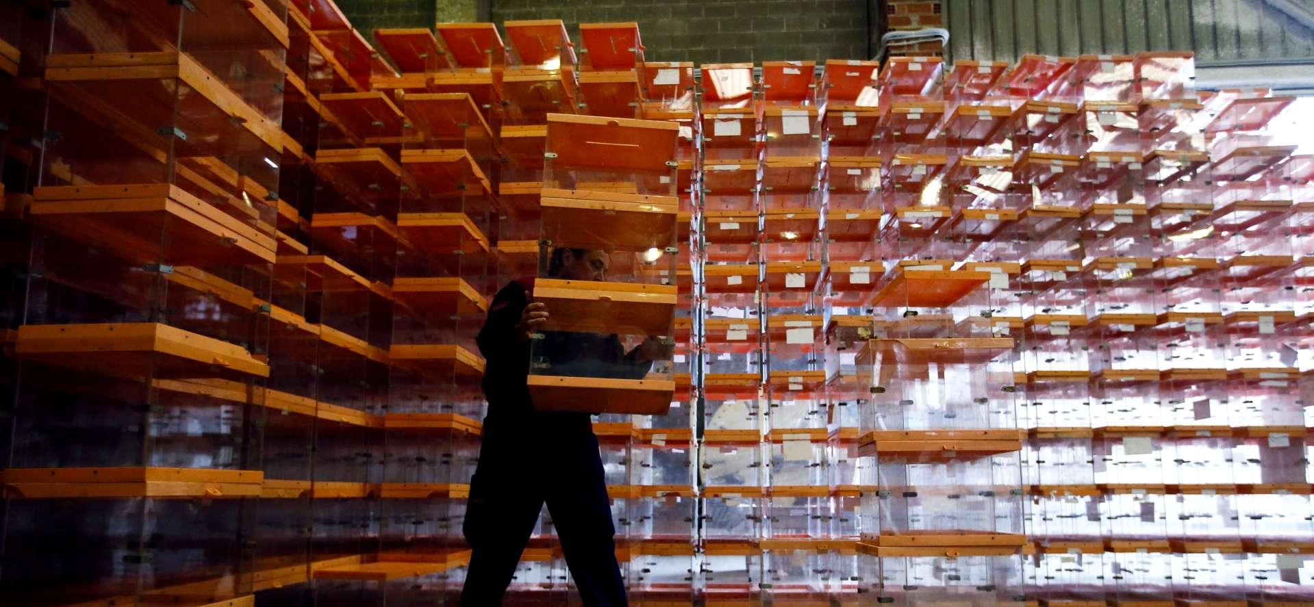 Un trabajador ordena las urnas que se utilizaran en las elecciones el domingo. Albert Gea. Reuters